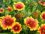 cvetnik-v-sentyabre-ili-osennij-buket